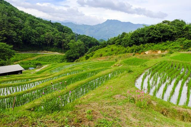 【真沢温泉】美人の湯と自然の摘み草料理で内と外から美しく