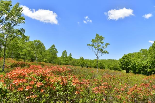 【花咲温泉】レンゲツツジの名所、大自然いっぱいの温泉