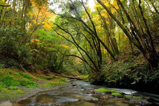 【新川温泉(新川渓谷温泉郷)】効能豊かな地下水も人気の温泉地