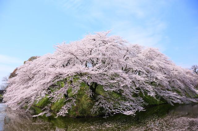 【大野目温泉】住宅街の中に湧く、美しい緑の湯