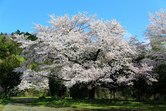 【佐野川温泉】良質な湯と自然の美しさに体と心を委ねたい