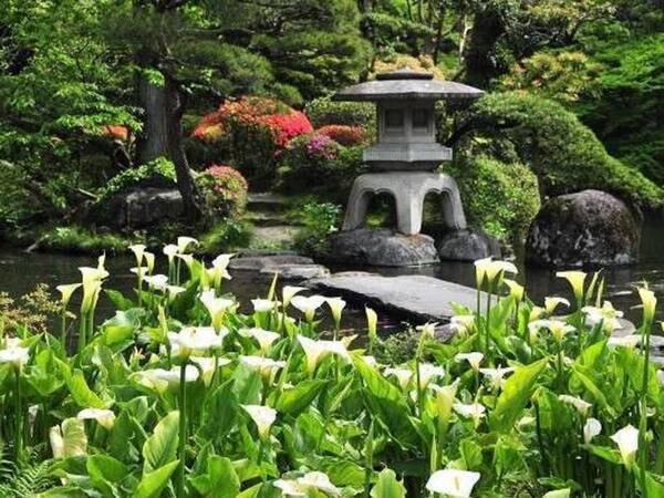 日本庭園(新緑・カラー)