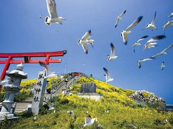 【観光スポット】蕪島神社までは車で約15分。ウミネコの生息地としても有名です