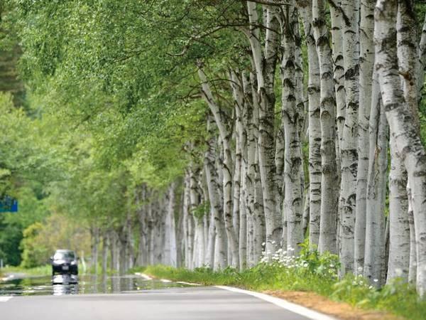 【ホテル前の白樺】グリーンシーズンは白樺の木が生い茂る