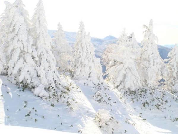 雪山のモンスター「樹氷」