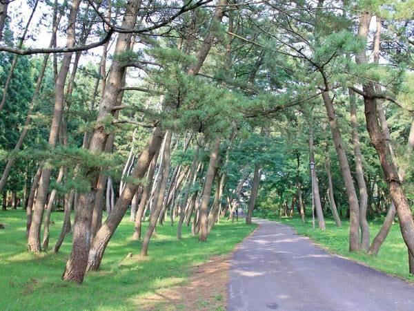 【風の松原】車で約10分。日本最大の松原が、南北14kmに渡って広がる