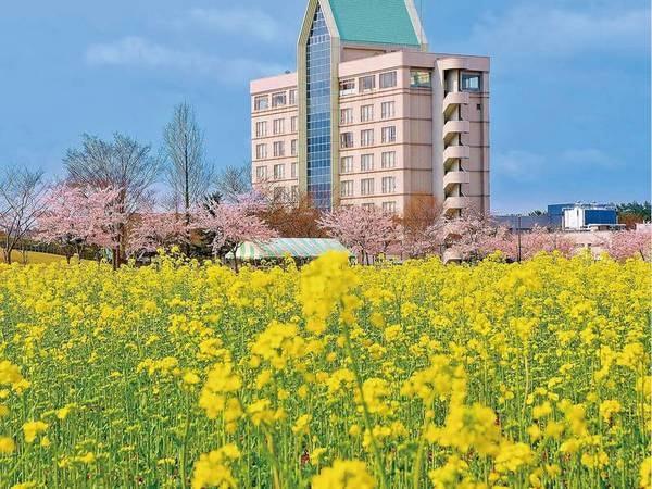 【外観】例年4月中ごろに菜の花に包まれる