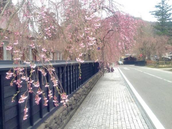 【周辺情報】車で15分の『武家屋敷』では、毎年4月下旬~5月上旬にかけて桜が見頃
