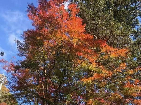 【周辺】秋は玄関脇にある木々が色づく