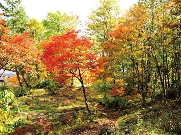 【ホテル周辺】秋は、ホテルの周りが紅葉に染まる