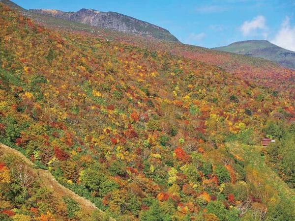 【周辺観光】安達太良山の紅葉が人気!見頃は10月下旬~11月上旬。