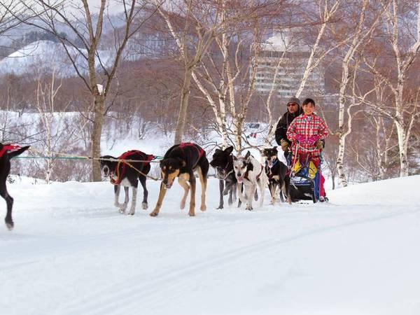 アクティビティ/犬ぞり※スキーシーズンのみ(有料)