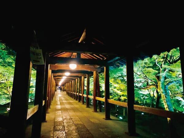 東福寺・通天橋ライトアップ(青もみじ)