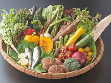 上柳屋オーガニックファームの新鮮な野菜/一例