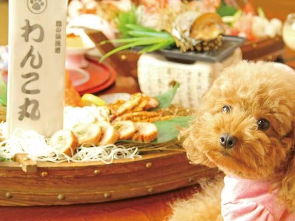 【ペットと泊まれる温泉宿 わん宿うの浜館】夕食時ワンちゃんプレートをサービス!超大型犬まで可能!和室で同室可能!和個室の食事処へワンちゃん同伴可能!