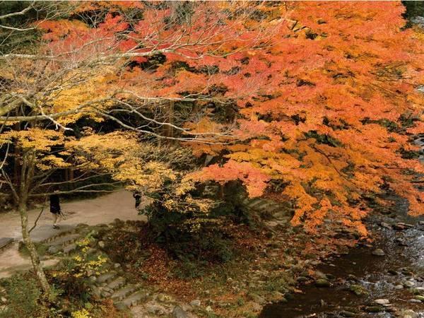 秋の鶴仙渓
