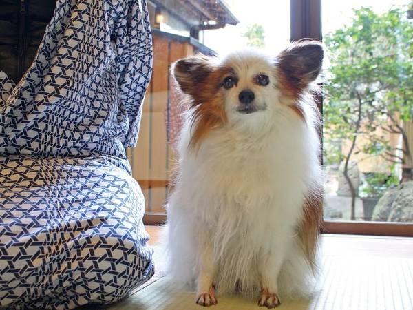 【看板犬】ペットと一緒にお部屋食が可能。宿主人も愛犬家