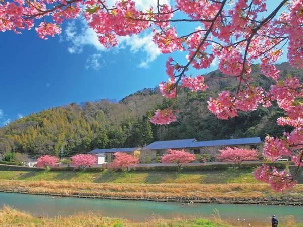 【全景】奥の建物がお宿。2月中旬以降、お部屋からはお花見ができる「河津桜眺望客室」は足の悪い方にもおすすめ!