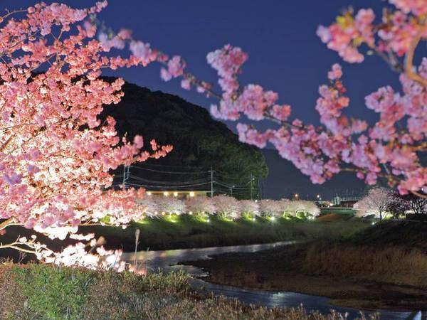 【観光情報/みなみの桜と菜の花まつり】期間は2月10日~3月10日。下賀茂温泉を流れる青野川沿いの早咲きの桜が花開きます。期間中はライトアップも!