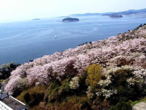 【西浦園地】春には桜も楽しめる