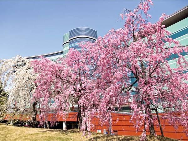 【春の外観】ホテル前で桜を愛でる