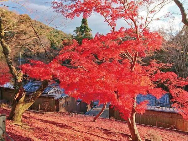 【紅葉情報】奈良公園の紅葉。10月下旬~12月上旬が例年の見頃!宿より車で約20分