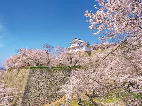 【鶴山公園(津山城)の桜】宿から車で約30分。例年見頃4月上旬~中旬