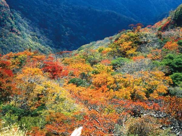 【周辺情報】仁田峠(ホテルから車で約15分)。海抜1,080mの仁田峠から更に上の妙見岳までのロープウェイの空中散歩