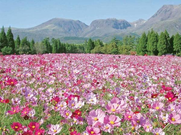 くじゅう花公園では四季折々の花を愉しめる/宿から車で約30分