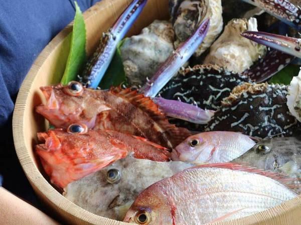 【旬の地魚満載!料理長おまかせ/例】