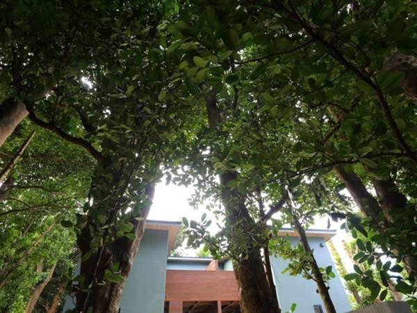 フクギ並木の中に建つ貸別荘