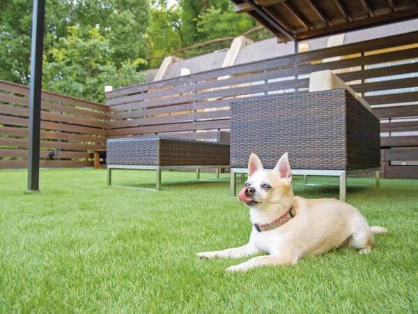 【ドッグラン】屋上には休憩スペースを兼ねたドッグランを併設