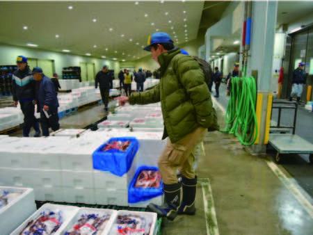 【市場】社長自ら仕入れる鮮魚