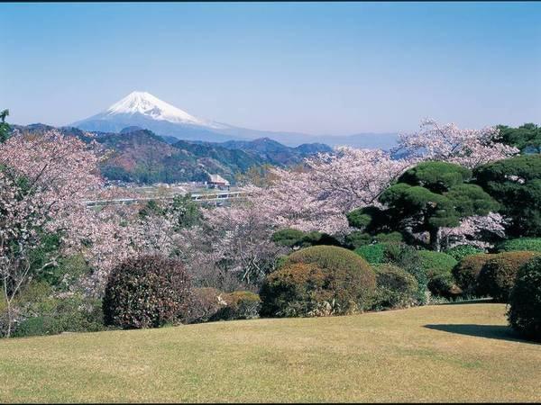 【春の庭園】春には庭園内の桜も開花。富士山と桜を臨めます