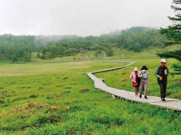 1000種の高山植物が咲き誇る「池の平湿地」