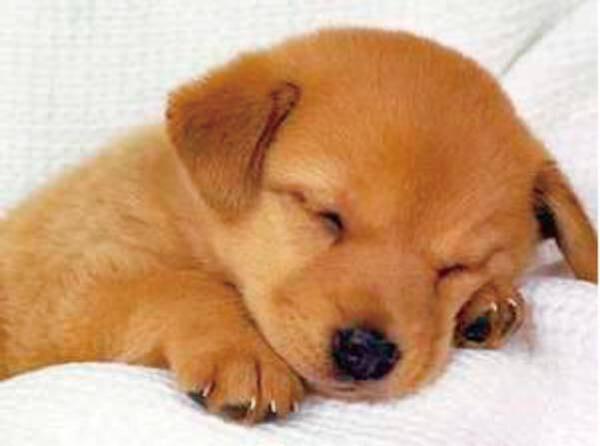 愛犬とご宿泊できるプランです♪