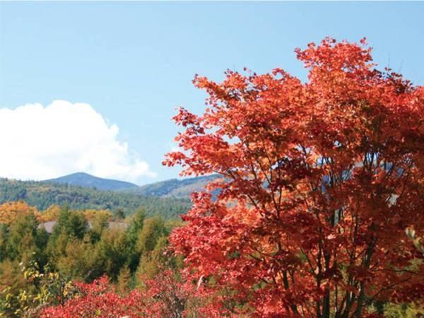 【秋の景観/例】黄・橙・赤と表情豊かに色づく景色