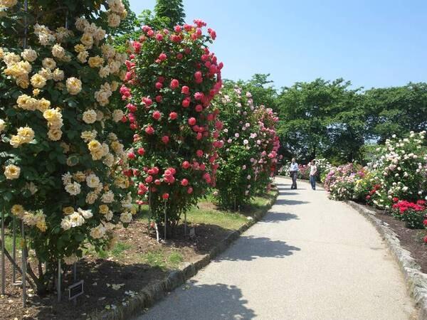 中野市一本木公園※車で約20分※写真は一例