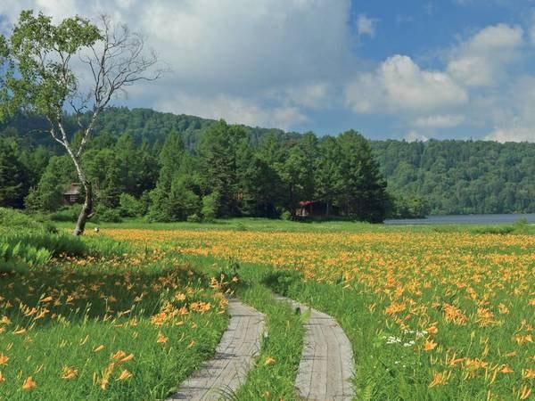 【尾瀬】大江湿原ニッコウキスゲ、例年6月~7月見ごろ