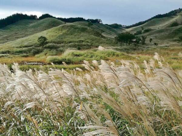 【周辺観光/砥峰高原】宿より車で約15分!約90haに及ぶススキの草原が広がる絶景スポット♪例年9月下旬から11月上旬が見頃。