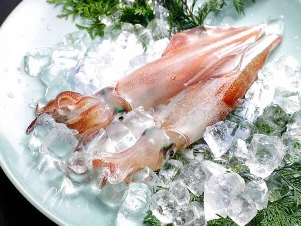 【夏:旬食満載会席プラン/例】6月~8月限定!人気のとれぴち新鮮な活イカ!活ならではの食感と味をお楽しみください!