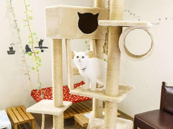 【キャットルーム】猫ちゃんも大満足!