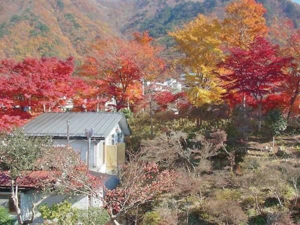 【秋の様子】周囲の木々が赤黄色に色づく