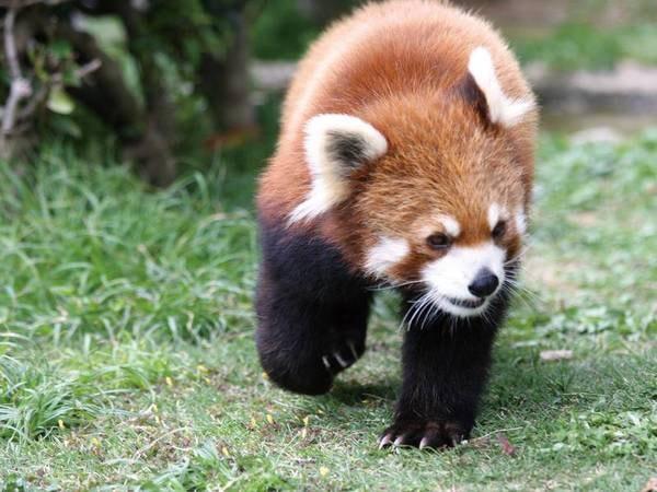 【周辺観光】浜松市動物園は宿から徒歩圏内♪