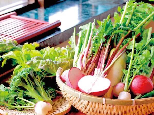 自家菜園の新鮮なお野菜