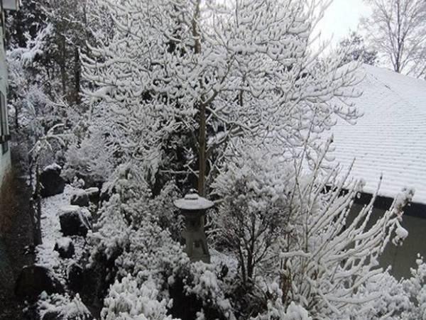 (冬)中庭の様子