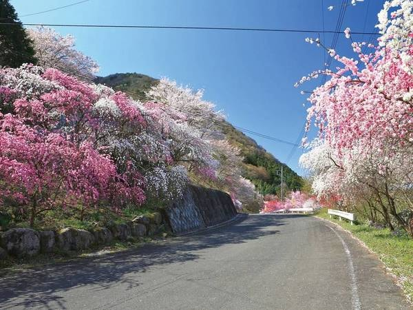 花桃は4月中旬頃まで見頃