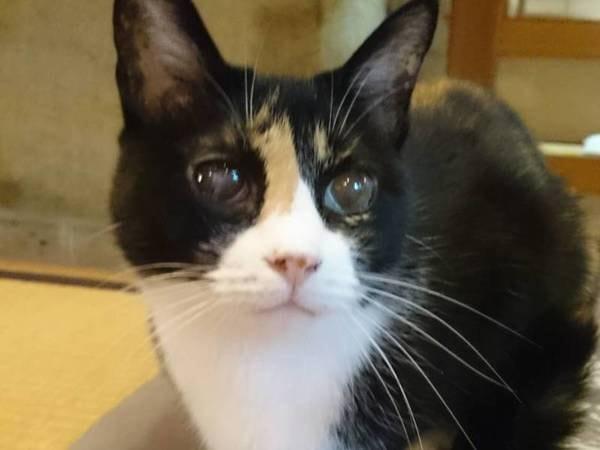ロビーの宿猫「ラッキーちゃん」