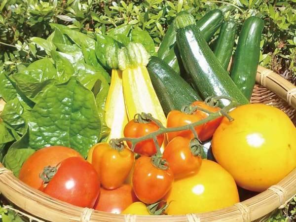 【創作田舎会席/例】自家菜園でとれた野菜や地元野菜をふんだんに使用
