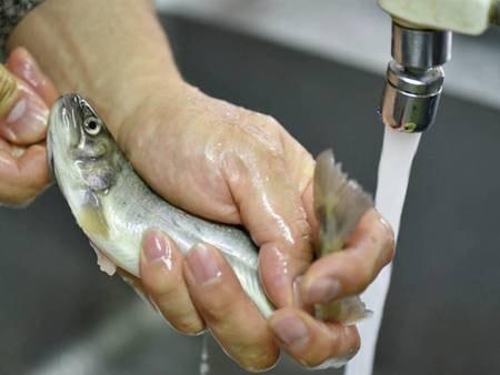 【上州牛付創作会席/例】清流育ちの岩魚